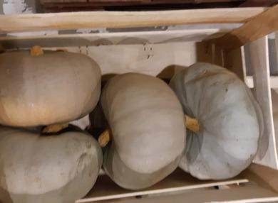 Légumes novembre