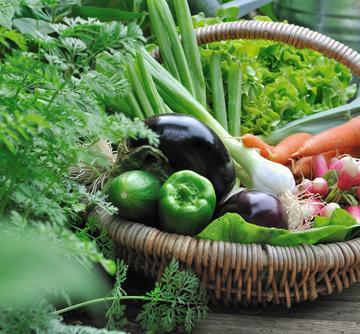Ces toulousains qui achètent leur panier de légumes sur internet